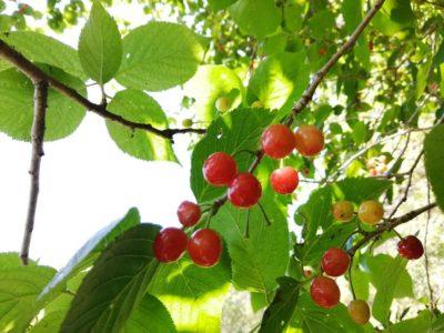 裏山で自然体験